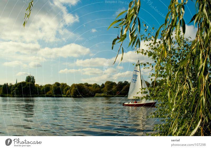sailing out of sight Segeln Wasserfahrzeug Segelboot Wolken grün maritim Freizeit & Hobby Baum Sommer Hamburg Küste Himmel Pflanze blau Schönes Wetter