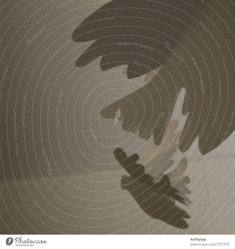 einheit Himmel weiß Religion & Glaube Vogel fliegen Luftverkehr Papier Flügel Hoffnung Dekoration & Verzierung Wunsch Frieden Symbole & Metaphern Schmuck Krieg Zweig