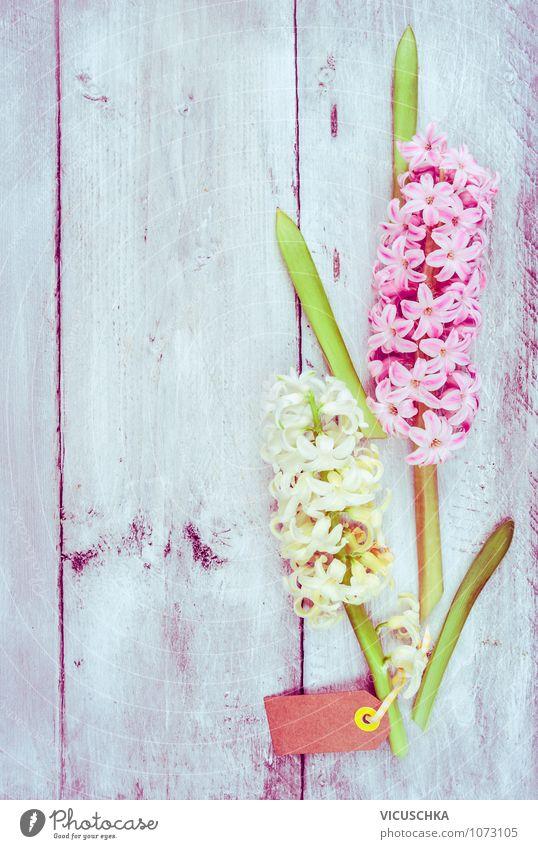 Hyazinthe auf hellem Holz Hintergrund Stil Design Garten Dekoration & Verzierung Feste & Feiern Valentinstag Muttertag Geburtstag Natur Pflanze Frühling Blume