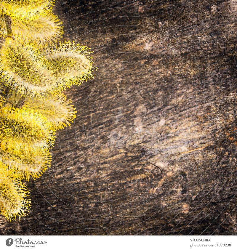 Gelbe Weidenkätzchen auf Holz Hintergrund Natur alt Pflanze dunkel gelb Frühling Stil Hintergrundbild Garten braun Design Dekoration & Verzierung weich