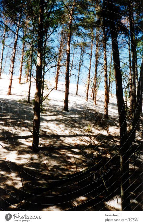 Schattenspiel Baum Wald