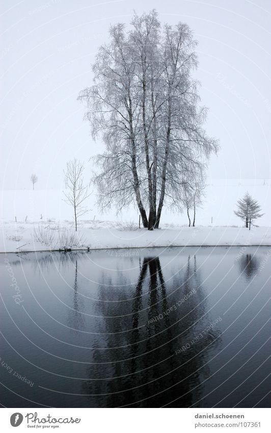Weihnachtskarte 3 Natur Wasser weiß Ferien & Urlaub & Reisen Sonne Winter Einsamkeit schwarz Schnee grau See Horizont Deutschland Hintergrundbild Nebel trist