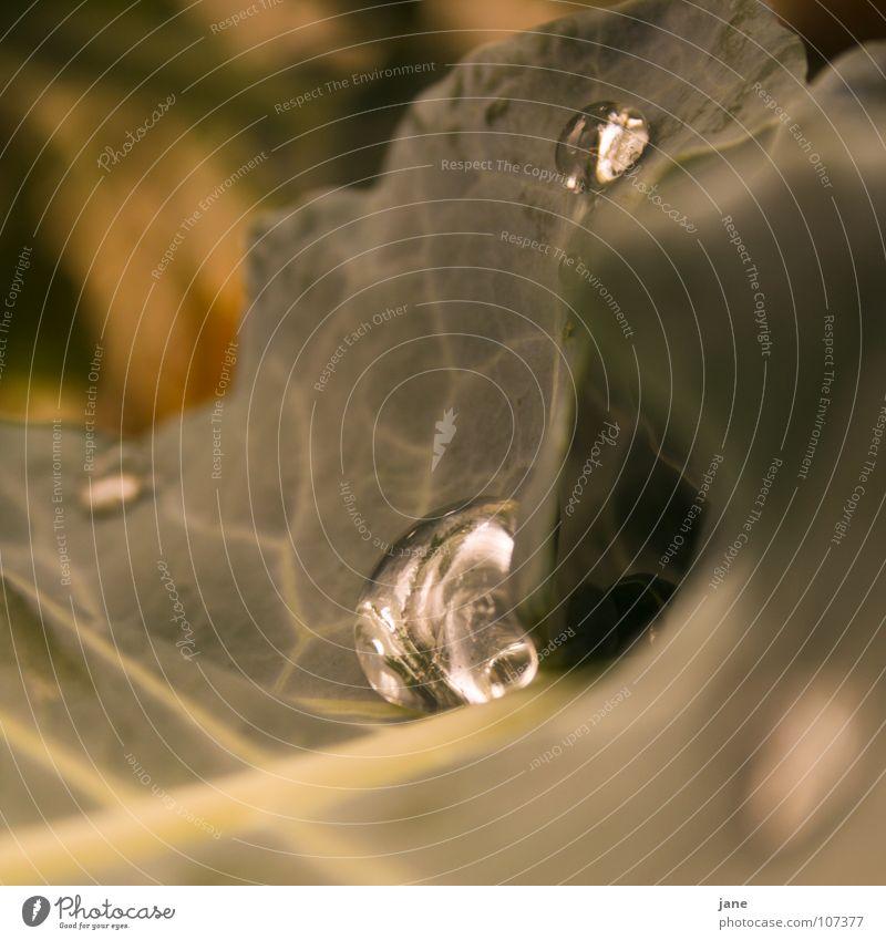 Glasklarer Flubber grün Blatt träumen Regen Glas Wassertropfen Tränen Broccoli Bewässerung Kreuzblütengewächse