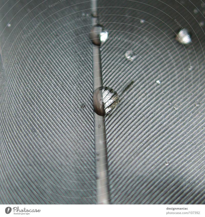 Parallel Universum Wasser weiß schwarz dunkel kalt grau Traurigkeit hell nass Wassertropfen mehrere Trauer Feder rund viele Weltall