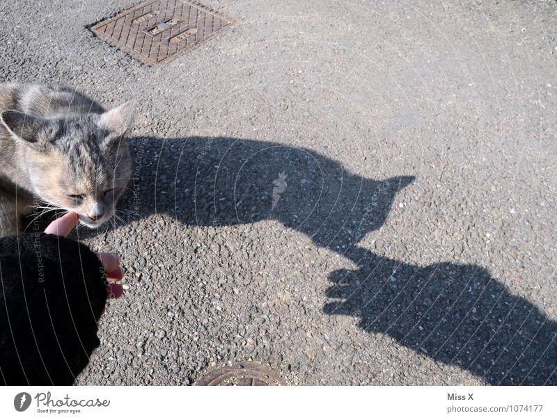 Hallo Streuner Katze Hand Tier Gefühle Stimmung Freundschaft Warmherzigkeit Finger Neugier Fell Haustier Geborgenheit Begrüßung Kuscheln Tierliebe Streicheln