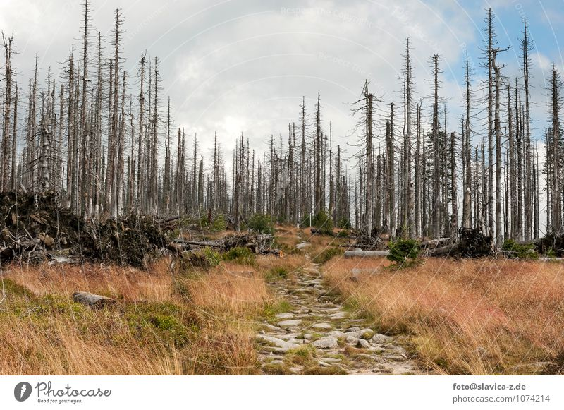 Waldsterben Natur Pflanze Baum Landschaft Wolken Tier Umwelt Berge u. Gebirge Frühling Deutschland Erde Park Wind Symbole & Metaphern Unwetter