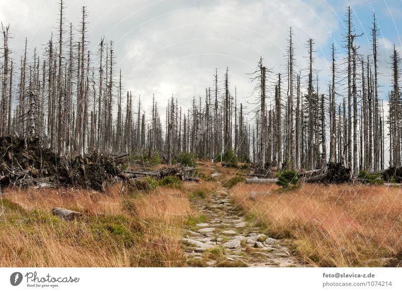 Waldsterben Umwelt Natur Landschaft Pflanze Tier Wolken Frühling Unwetter Wind Baum Park Berge u. Gebirge bevölkert Sehenswürdigkeit mehrfarbig Erde poisoned