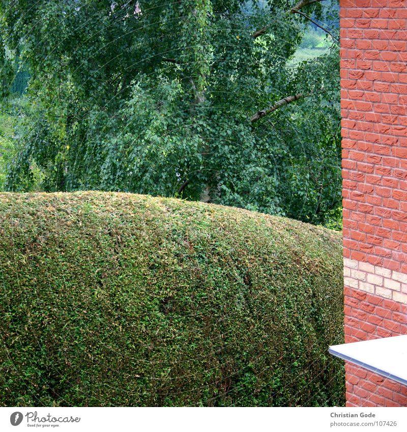 Gut geschnitten weiß Baum grün rot Garten Backstein England Garage Hecke Oldtimer geschnitten Nachmittag Gärtner Einfamilienhaus Samstag Garagentor