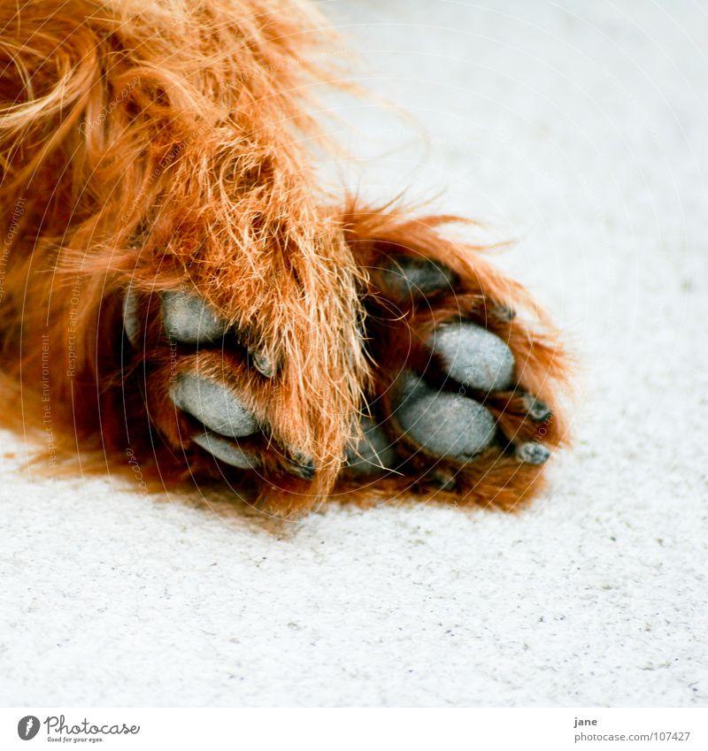 Einfach mal ausruhen ... Hand weiß schwarz Tier Erholung Gefühle Hund braun schlafen Pfote