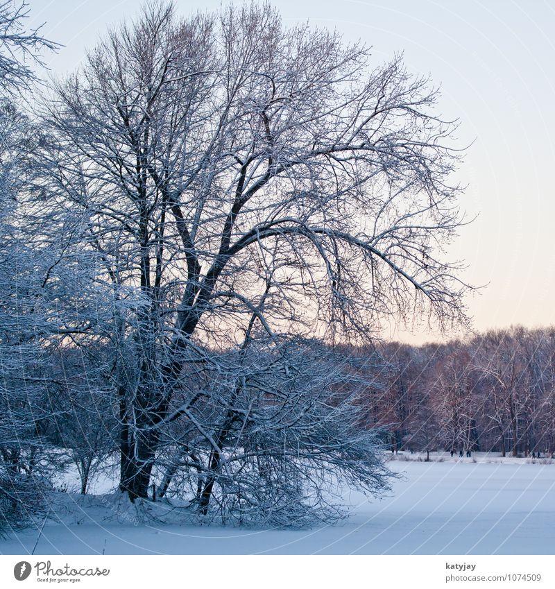 Winter Wald Schneelandschaft Winterlicht Winterwald Dämmerung Schneefall Dezember Stimmung Sonne Baum kalt Januar November Sonnenstrahlen Landschaft Frost