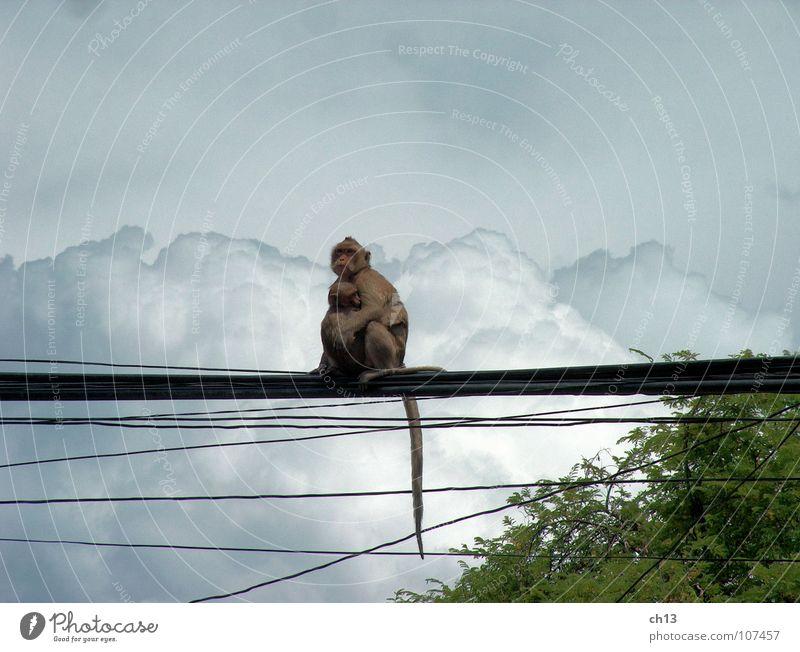 Vor dem Sturm Himmel Wolken Tier Regen Asien Gewitter Säugetier Affen Monsun