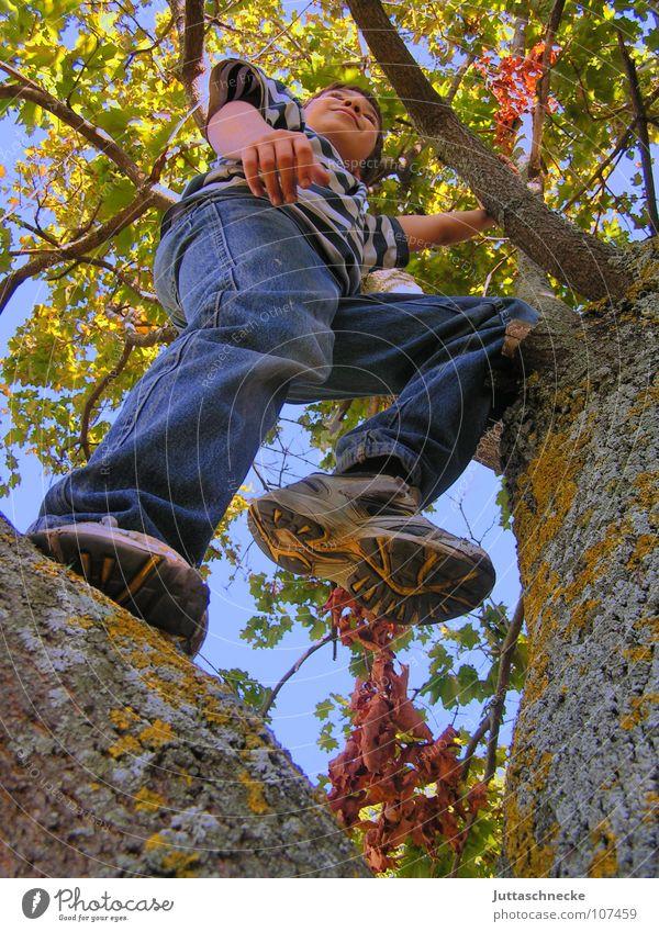 Hoch hinaus Mensch Kind Natur Baum Freude Blatt Leben Junge Herbst Spielen oben Glück Schuhe Zufriedenheit lustig Erfolg