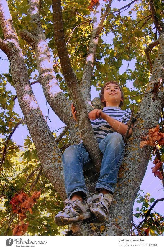 Ja Mensch Kind Natur Baum Freude Blatt Leben Herbst Spielen oben Junge Glück lustig Zufriedenheit Schuhe hoch