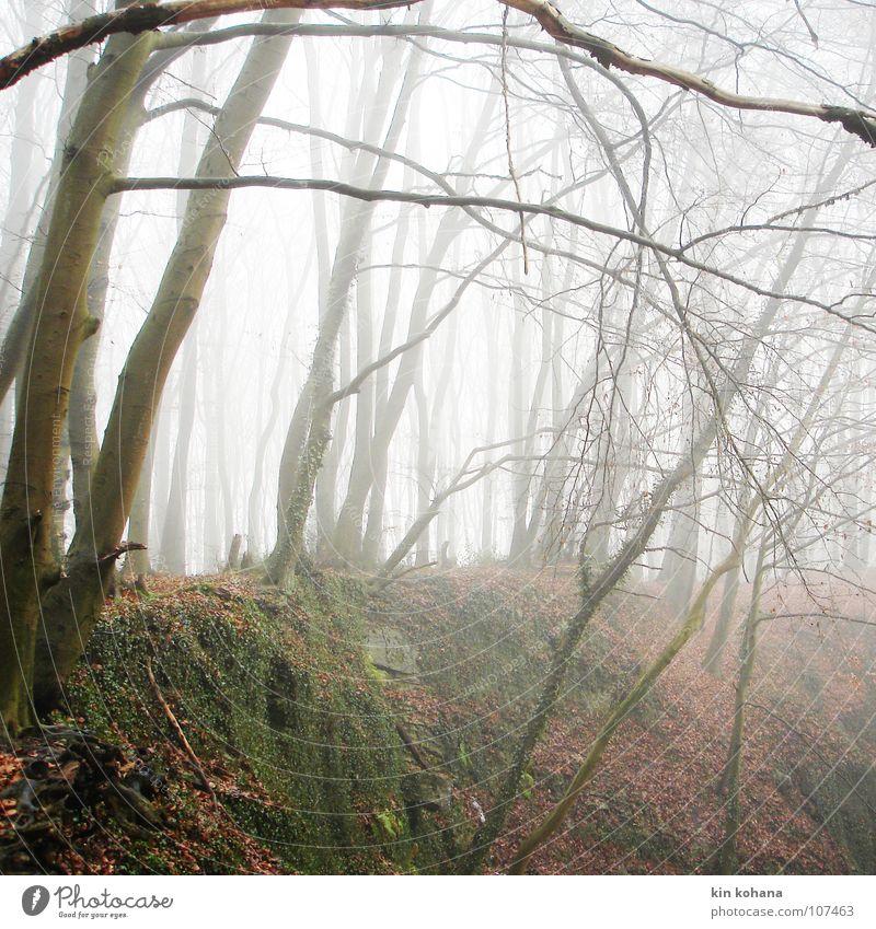 abgründe ruhig Herbst schlechtes Wetter Nebel Baum Efeu Blatt Wald Felsen kalt Kraft Trauer Einsamkeit Verzweiflung Vergänglichkeit Ausweg Steinbruch feucht