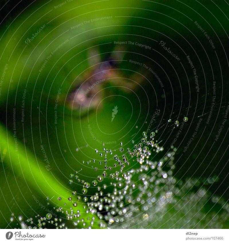 Spinne Tropfen Netz Wasser Wiese Regen Glas Wassertropfen Diamant Edelstein Schmuck