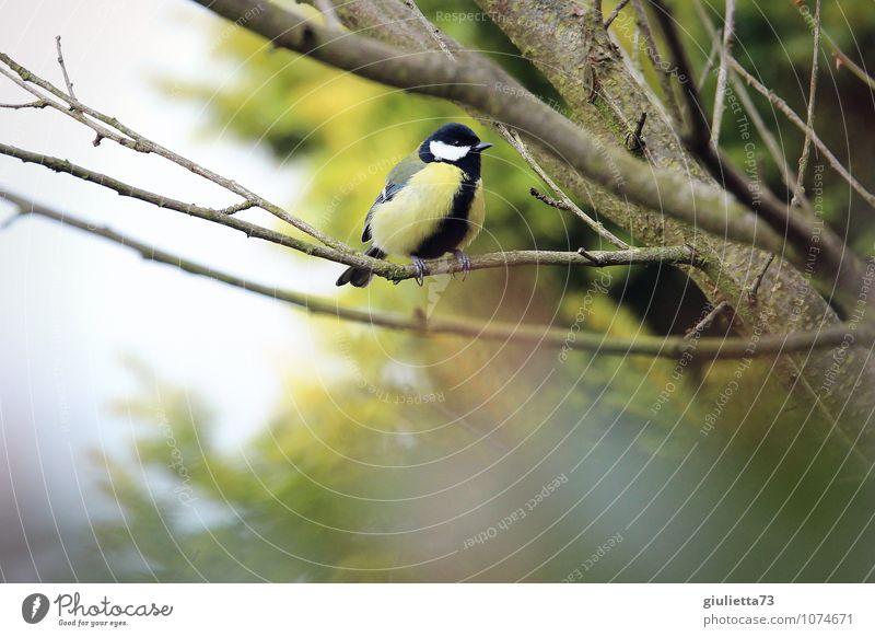 Bald wird es Frühling! Natur grün Tier Winter gelb Herbst natürlich Glück klein Garten Vogel Wildtier sitzen Erfolg warten