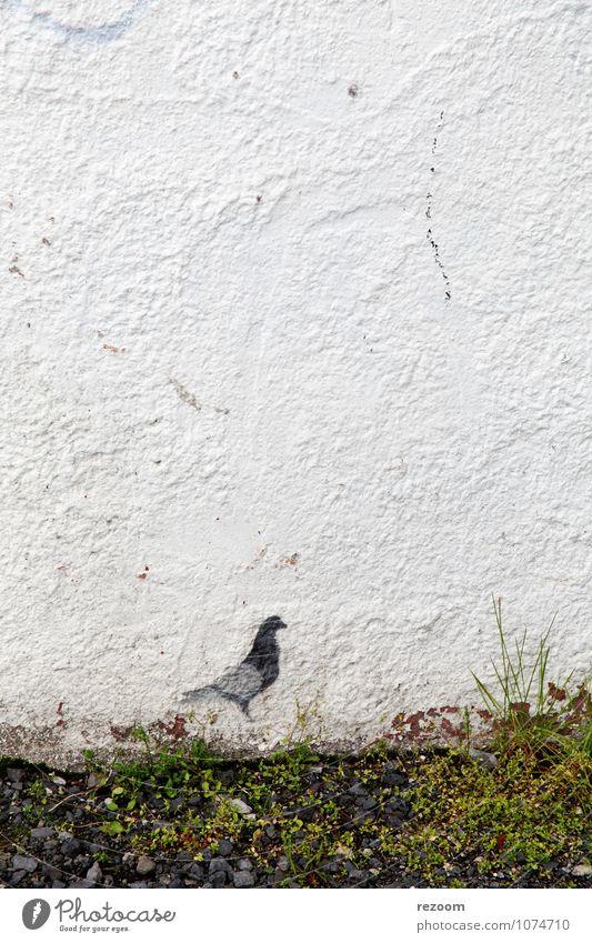 Taube Gras Wiese Mauer Wand 1 Tier Graffiti grau grün weiß Einsamkeit entdecken Umwelt Farbfoto Außenaufnahme Detailaufnahme Menschenleer Textfreiraum links