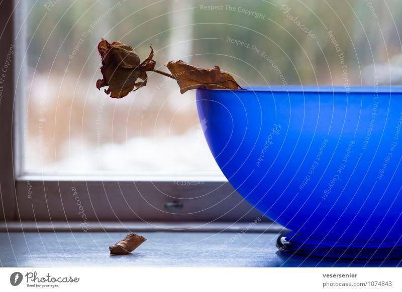 as time goes by... alt blau Blume Traurigkeit Senior Tod Zeit Stimmung ästhetisch Vergänglichkeit Wandel & Veränderung fallen Trauer Rose Ende Stillleben