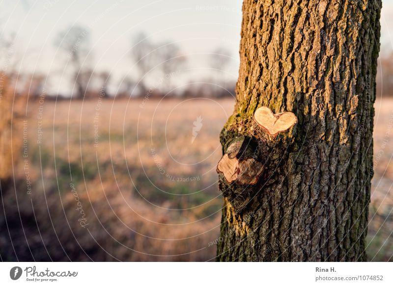 Herzlich Winter Natur Landschaft Horizont Schönes Wetter Baum Wiese natürlich Gefühle Liebe Baumstamm herzlich Ast Farbfoto Außenaufnahme Menschenleer