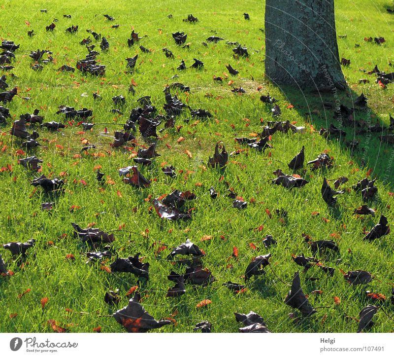 herbstlich... Herbst Blatt mehrere welk fallen Gras Wiese Halm Baum Baumstamm Baumrinde nebeneinander Stengel zusammengerollt grün braun hellbraun grau