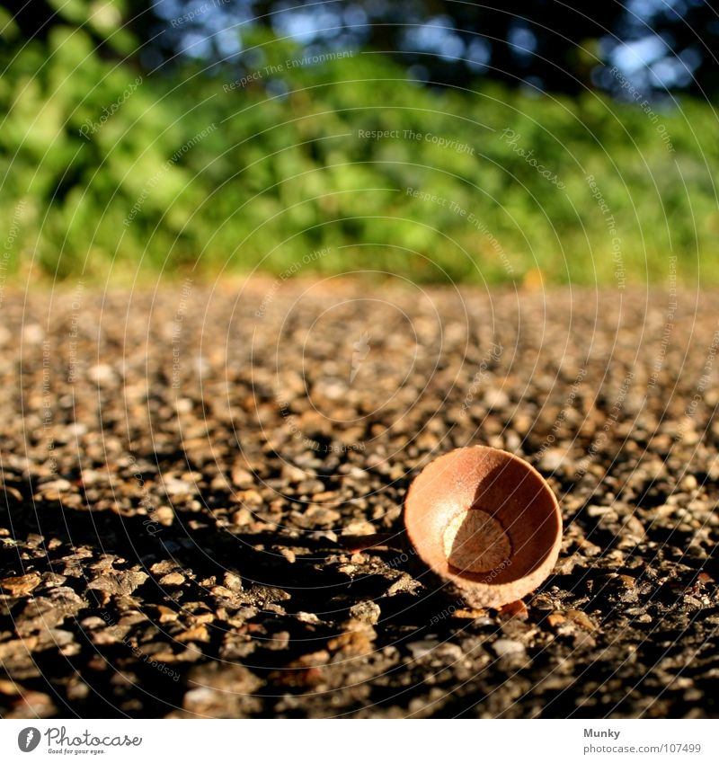 Tief gefallen! Natur grün blau Baum Pflanze Einsamkeit Tier Straße Herbst Holz Stil Sand Wege & Pfade Wärme Stein braun