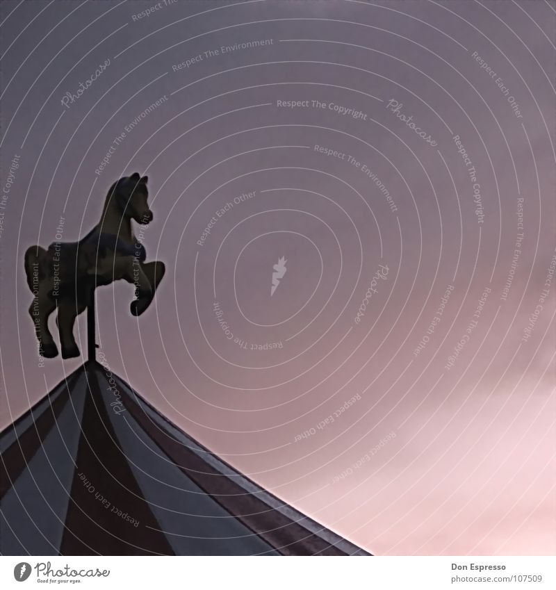 Karussellgaul Himmel Freude Wolken Feste & Feiern Ausflug Pferd Aktion Freizeit & Hobby Kindheit Jahrmarkt Zirkus Buden u. Stände Karussell Esel Kiosk Wochenende