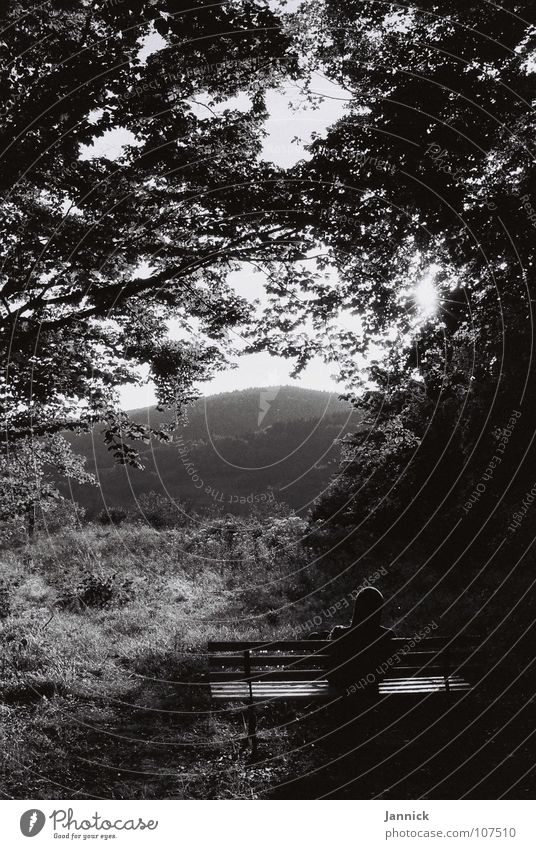 Kommt Zeit, kommt Rat Mensch Mann Natur Baum ruhig Blatt Wald Wiese Berge u. Gebirge Wassertropfen trist Bank