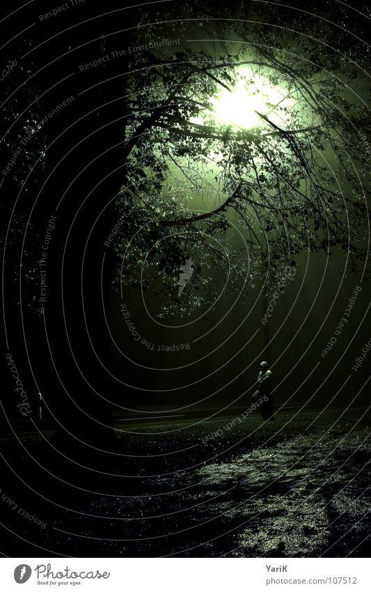 alone in the dark Nacht dunkel Laterne Licht Nebel Beleuchtung glühen Baum Blatt grün Mann Jacke Kapuze nass feucht kalt Beton Asphalt Wiese grauenvoll