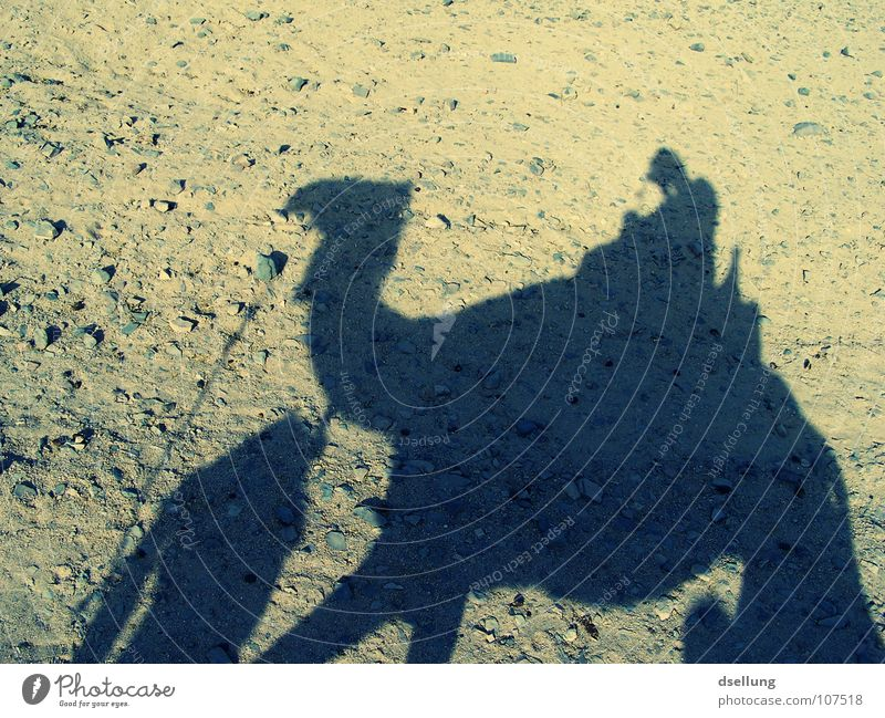 Schatten eines Kamels und Menschen am Abend Ägypten Licht heiß Physik Schaukel trocken dunkel Beduinen Schweiß transpirieren Kopftuch Fell Fußspur Ödland