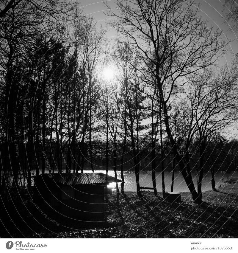 Gedankengang Umwelt Natur Landschaft Pflanze Wasser Wolkenloser Himmel Horizont Klima Schönes Wetter Baum Gras Ast Zweige u. Äste karg kahl Wald Seeufer Hütte