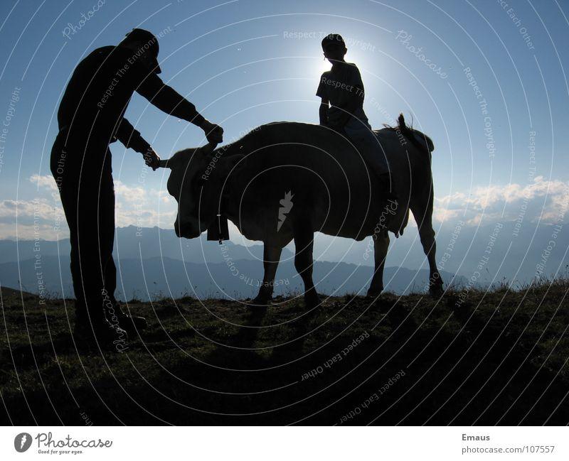 Cowboy Kuh Mann Wolken wandern Schweiz Sonne Berge u. Gebirge