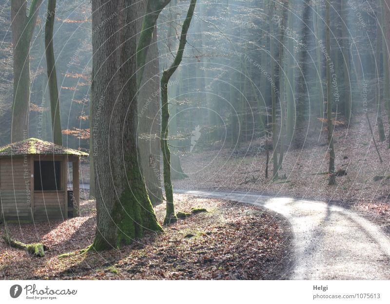 die Hütte im Wald... Natur Pflanze grün Baum Einsamkeit Landschaft ruhig Winter Wald Umwelt natürlich Wege & Pfade grau Stimmung braun Wachstum