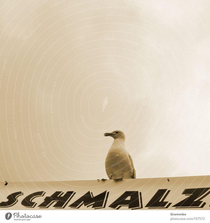 Schmalzbrötchen mit Schuss Wolken grau Vogel Möwe lecker Mahlzeit Schnabel schlechtes Wetter Imbiss Federvieh