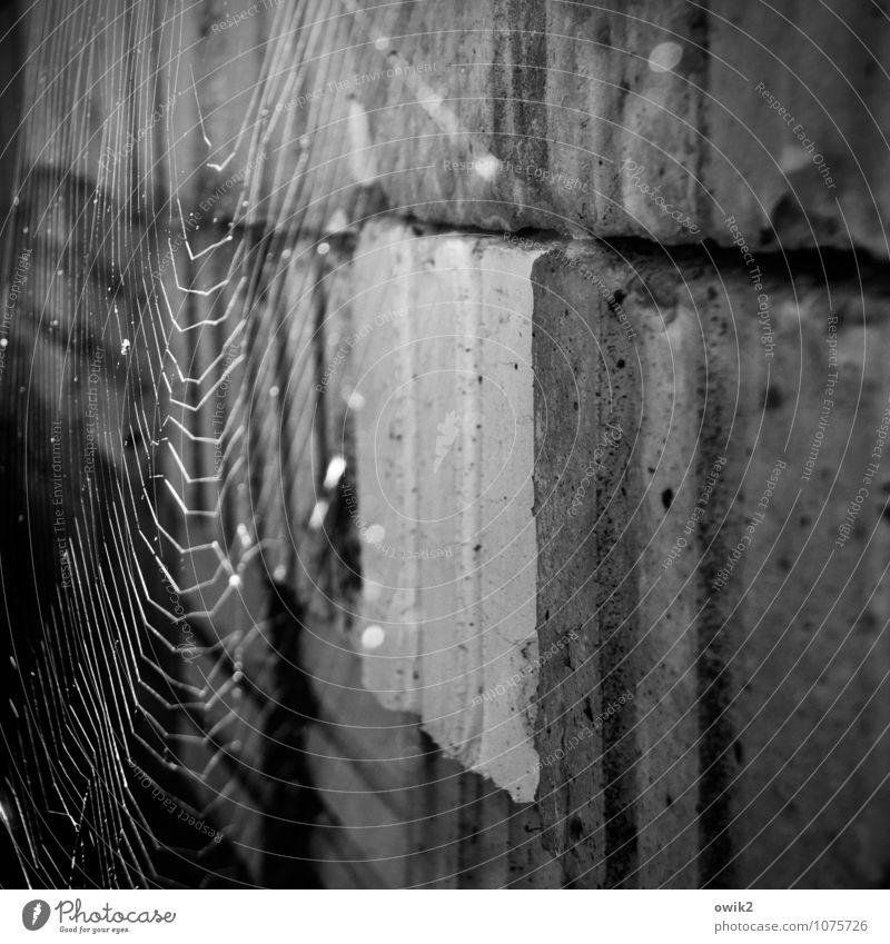 Hängematte Natur Tier Stein hängen leuchten dünn authentisch fest Spinnennetz Spinngewebe netzartig gewebt Quader Stapel Schwarzweißfoto Außenaufnahme
