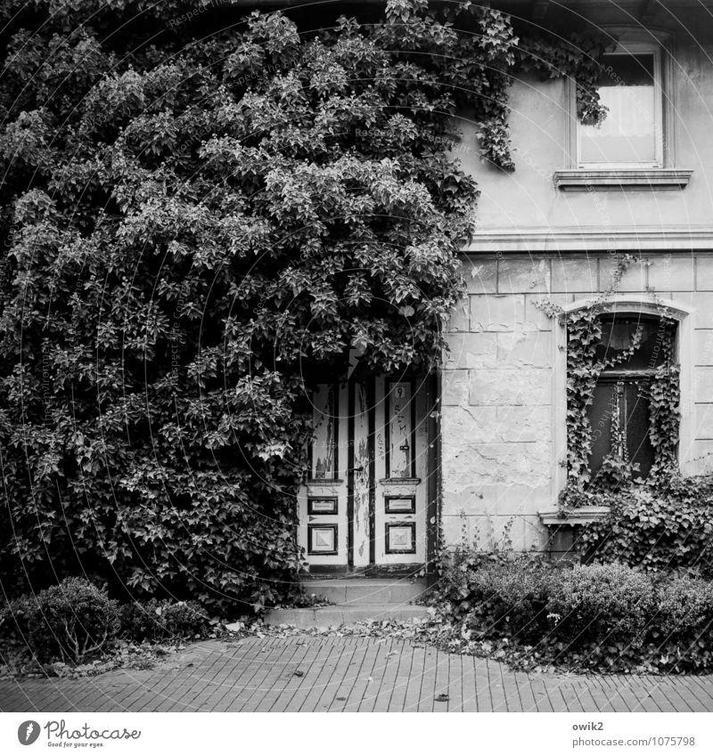 Biologischer Dämmstoff Natur Stadt alt Pflanze Haus Fenster Wand natürlich Mauer Fassade Wachstum Tür Vergänglichkeit Wandel & Veränderung Verfall gruselig
