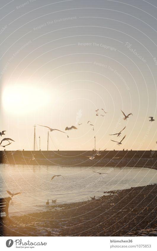 Wasserzeichen | Wasser birgt Leben! Himmel Natur ruhig natürlich fliegen See Vogel Wasserfahrzeug Luft Schönes Wetter Seeufer Kitsch Bucht Bank Hafen