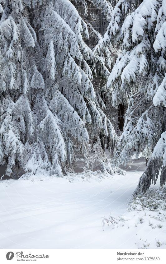 Winter Winterurlaub Landschaft Klima Wetter Eis Frost Schnee Baum Wald Wege & Pfade frieren weiß Natur rein stagnierend Winterwald Thüringer Wald Fichtenwald