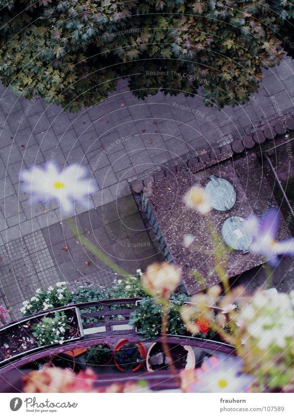 mauerblümchen Blume Blüte Balkon Asphalt grün Sommer Herbst nass durcheinander schön blau gehsteig Kopfsteinpflaster mülltonnendeckel Regen Wildtier frei Stolz