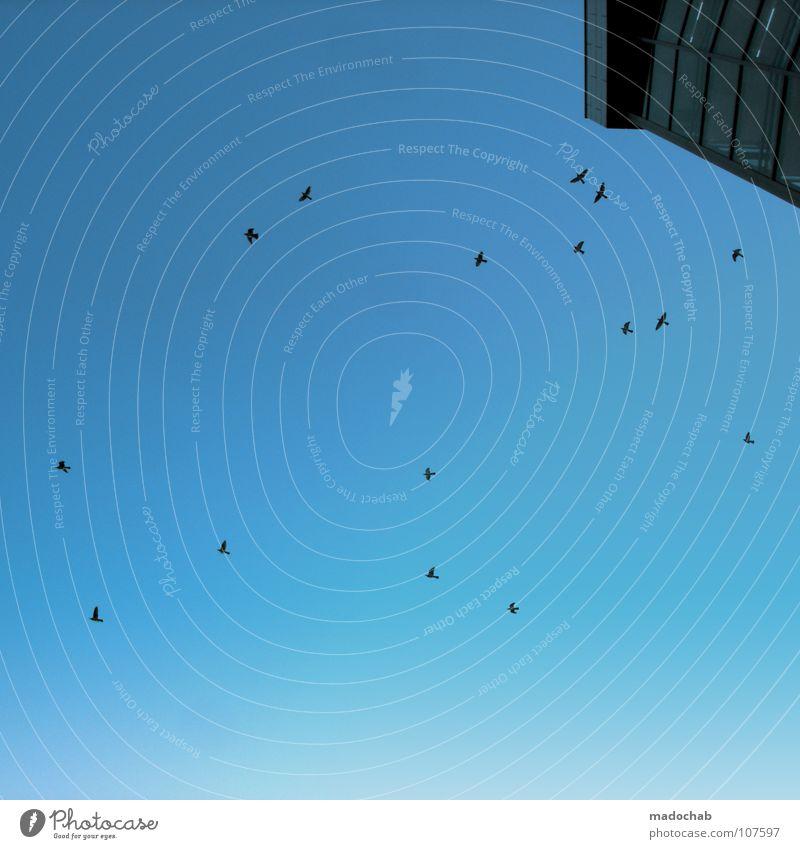 KUNSTFLIEGERSTAFFEL ON BLUESCREEN Hochhaus Haus Gebäude Beton Fassade Himmel Etage groß Macht Frankfurt am Main Vogel Tier gleiten Schweben Bewegung elegant