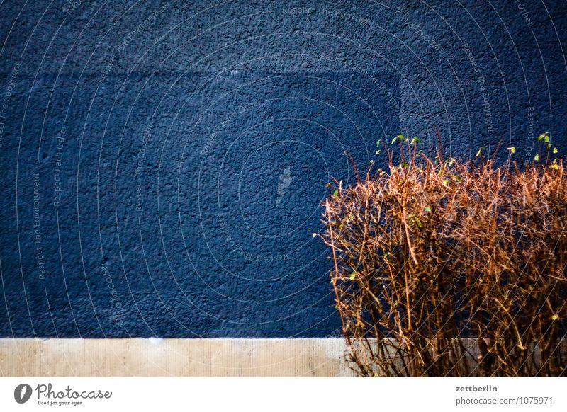 Wand und Hecke Berlin Haus Wohnhaus Mauer Farbe schwarz Textfreiraum Graffiti Grafik u. Illustration übermalt Anstreicher dunkel Winter Ecke Wohngebiet Pflanze
