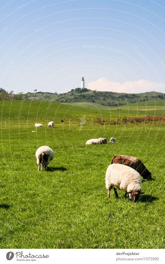 Frühlingsidylle mit Gras vor Leuchtturm Natur Ferien & Urlaub & Reisen Pflanze Landschaft Tier Ferne Umwelt Gefühle Wiese Zufriedenheit Tourismus Idylle Insel