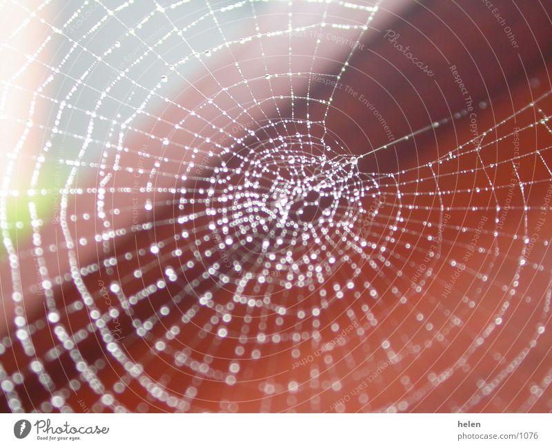 spinnennetz bei tag Spinne Spinnennetz Wassertropfen Seil