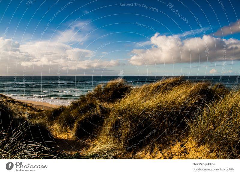 Düne in Cornwall Ferien & Urlaub & Reisen Tourismus Ausflug Ferne Freiheit Umwelt Natur Landschaft Pflanze Tier Urelemente Wolken Frühling Schönes Wetter Hügel