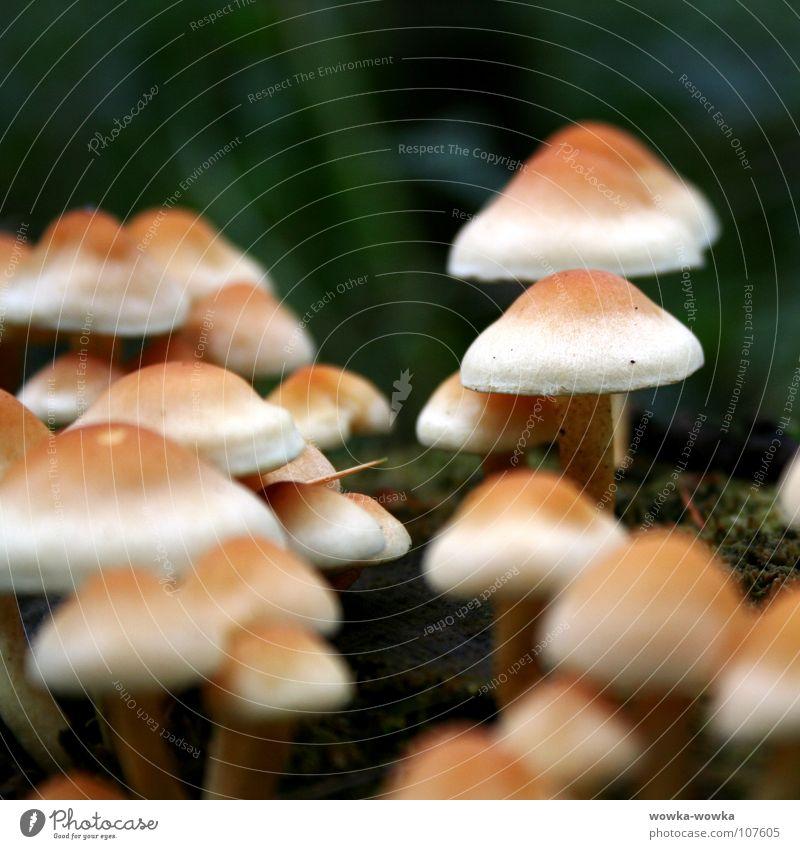 Pilze grün schwarz gelb