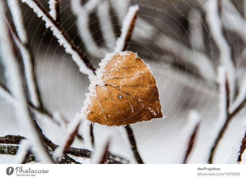 Ein Blatt hat schon mal durchgehalten Natur Ferien & Urlaub & Reisen Pflanze Blatt Winter Berge u. Gebirge Umwelt Gefühle Schnee Stimmung Eis Tourismus Ausflug Schönes Wetter Neugier Frost