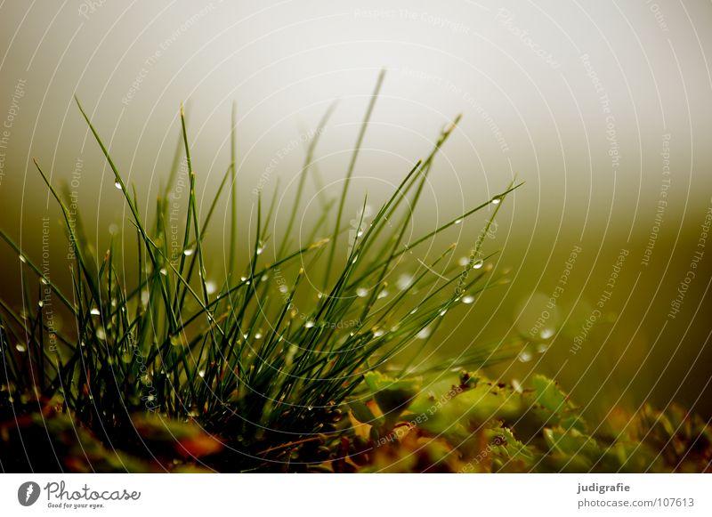 Wiese, morgens Gras Nebel Wachstum grün Stengel weich zart Umwelt Pflanze Herbst Morgen frisch nass Farbe Natur Wassertropfen Seil