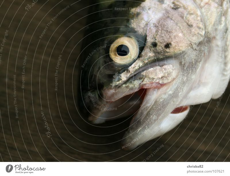 fangfrische Forelle Auge Tod See Freizeit & Hobby Fisch Fluss Gebiss lecker Angeln Teich Glätte ködern Bach Scheune Regenbogen ziehen