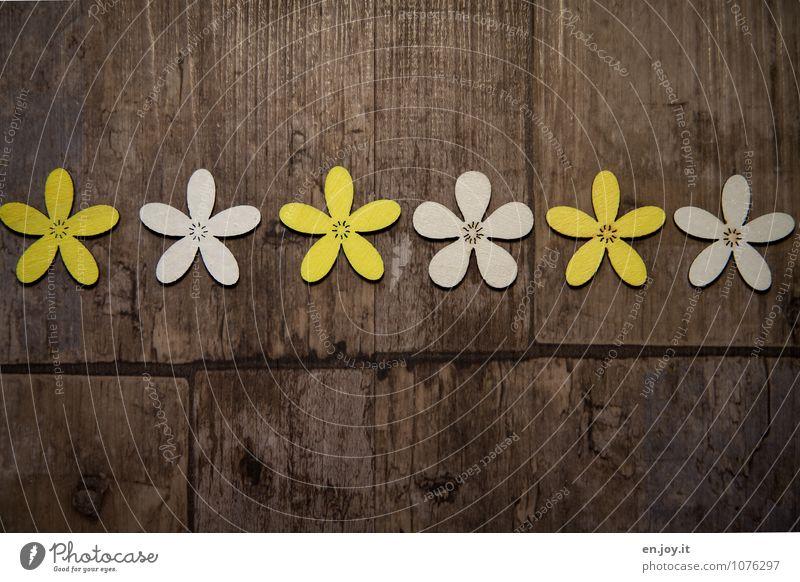 gelb weiß gelb weiß gelb weiß schön Sommer Blume Freude Liebe Frühling Blüte Holz Feste & Feiern braun Geburtstag Fröhlichkeit Lebensfreude Romantik