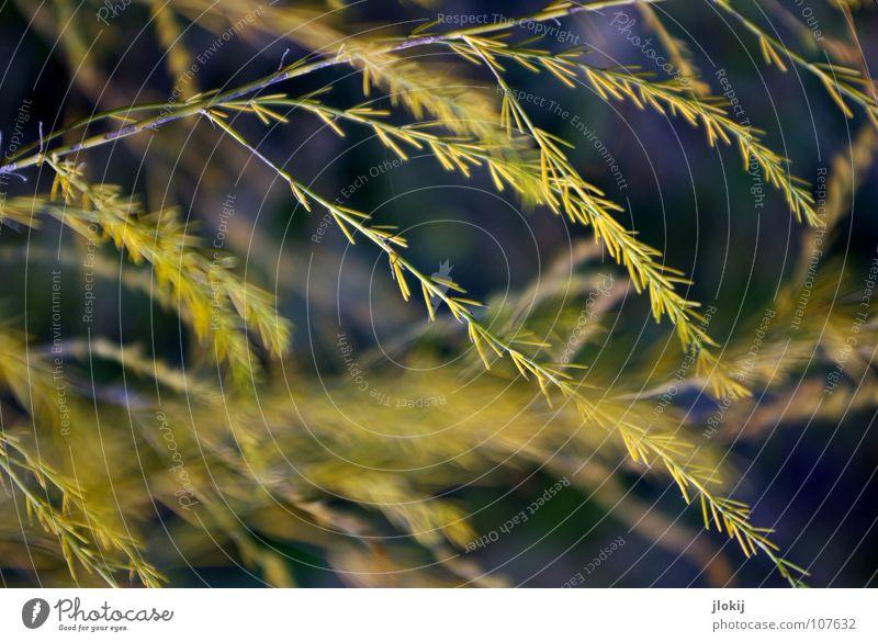 Deko Natur schön Pflanze gelb kalt dunkel Herbst Bewegung Gras Feld Wind Wachstum Sträucher weich violett zart