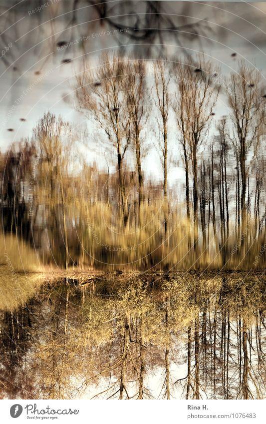 Verkehrte Welt II Pflanze Baum Landschaft Umwelt Gras Frühling natürlich See Sträucher gemalt Surrealismus verkehrt
